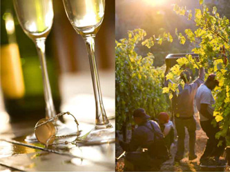 sparkling-wine-and-harvest-photos